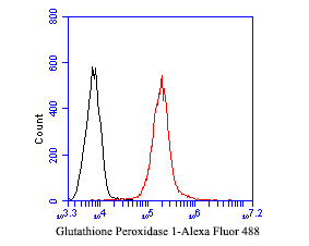 Flow cytometric analysis of Glutathione peroxidase 1 was done on THP-1 cells. The cells were fixed, permeabilized and stained with the primary antibody (EM1901-56, 1/50) (red). After incubation of the primary antibody at room temperature for an hour, the cells were stained with a Alexa Fluor 488-conjugated Goat anti-Mouse IgG Secondary antibody at 1/1000 dilution for 30 minutes.Unlabelled sample was used as a control (cells without incubation with primary antibody; black).