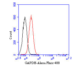 Flow cytometric analysis of GAPDH was done on A549 cells. The cells were fixed, permeabilized and stained with the primary antibody (EM1901-57, 1/50) (red). After incubation of the primary antibody at room temperature for an hour, the cells were stained with a Alexa Fluor 488-conjugated Goat anti-Mouse IgG Secondary antibody at 1/1000 dilution for 30 minutes.Unlabelled sample was used as a control (cells without incubation with primary antibody; black).