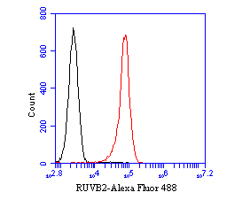 Flow cytometric analysis of RUVB2 was done on HL-60 cells. The cells were fixed, permeabilized and stained with the primary antibody (EM1901-58, 1/50) (red). After incubation of the primary antibody at room temperature for an hour, the cells were stained with a Alexa Fluor 488-conjugated Goat anti-Mouse IgG Secondary antibody at 1/1000 dilution for 30 minutes.Unlabelled sample was used as a control (cells without incubation with primary antibody; black).
