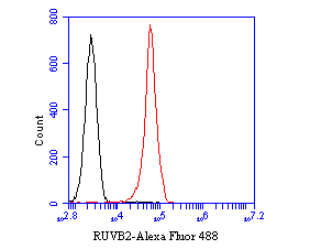 Flow cytometric analysis of RUVB2 was done on HL-60 cells. The cells were fixed, permeabilized and stained with the primary antibody (EM1901-59, 1/50) (red). After incubation of the primary antibody at room temperature for an hour, the cells were stained with a Alexa Fluor 488-conjugated Goat anti-Mouse IgG Secondary antibody at 1/1000 dilution for 30 minutes.Unlabelled sample was used as a control (cells without incubation with primary antibody; black).