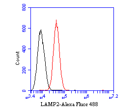 Flow cytometric analysis of LAMP2 was done on SiHa cells. The cells were fixed, permeabilized and stained with the primary antibody (EM1901-62, 1/50) (red). After incubation of the primary antibody at room temperature for an hour, the cells were stained with a Alexa Fluor 488-conjugated Goat anti-Mouse IgG Secondary antibody at 1/1000 dilution for 30 minutes.Unlabelled sample was used as a control (cells without incubation with primary antibody; black).