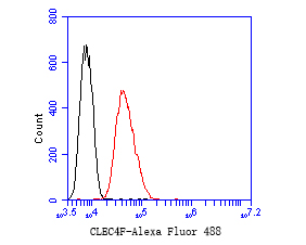 Flow cytometric analysis of CLEC4F was done on SH-SY5Y cells. The cells were fixed, permeabilized and stained with the primary antibody (EM1901-63, 1/50) (red). After incubation of the primary antibody at room temperature for an hour, the cells were stained with a Alexa Fluor 488-conjugated Goat anti-Mouse IgG Secondary antibody at 1/1000 dilution for 30 minutes.Unlabelled sample was used as a control (cells without incubation with primary antibody; black).