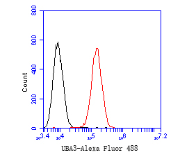 Flow cytometric analysis of UBA3 was done on SiHa cells. The cells were fixed, permeabilized and stained with the primary antibody (EM1901-66, 1/50) (red). After incubation of the primary antibody at room temperature for an hour, the cells were stained with a Alexa Fluor 488-conjugated Goat anti-Mouse IgG Secondary antibody at 1/1000 dilution for 30 minutes.Unlabelled sample was used as a control (cells without incubation with primary antibody; black).