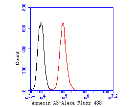 Flow cytometric analysis of Annexin A3 was done on A431 cells. The cells were fixed, permeabilized and stained with the primary antibody (EM1901-73, 1/50) (red). After incubation of the primary antibody at room temperature for an hour, the cells were stained with a Alexa Fluor 488-conjugated Goat anti-Mouse IgG Secondary antibody at 1/1000 dilution for 30 minutes.Unlabelled sample was used as a control (cells without incubation with primary antibody; black).