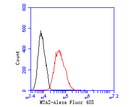 Flow cytometric analysis of MTA2 was done on MCF-7 cells. The cells were fixed, permeabilized and stained with the primary antibody (EM1901-74, 1/50) (red). After incubation of the primary antibody at room temperature for an hour, the cells were stained with a Alexa Fluor 488-conjugated Goat anti-Mouse IgG Secondary antibody at 1/1000 dilution for 30 minutes.Unlabelled sample was used as a control (cells without incubation with primary antibody; black).