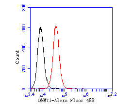 Flow cytometric analysis of DNMT1 was done on JAR cells. The cells were fixed, permeabilized and stained with the primary antibody (EM1901-83, 1/50) (red). After incubation of the primary antibody at room temperature for an hour, the cells were stained with a Alexa Fluor 488-conjugated Goat anti-Mouse IgG Secondary antibody at 1/1000 dilution for 30 minutes.Unlabelled sample was used as a control (cells without incubation with primary antibody; black).