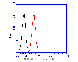 Flow cytometric analysis of MCU was done on A549 cells. The cells were fixed, permeabilized and stained with the primary antibody (EM1901-85, 1/50) (red). After incubation of the primary antibody at room temperature for an hour, the cells were stained with a Alexa Fluor 488-conjugated Goat anti-Mouse IgG Secondary antibody at 1/1000 dilution for 30 minutes.Unlabelled sample was used as a control (cells without incubation with primary antibody; black).