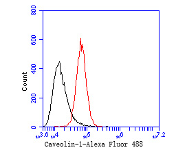 Flow cytometric analysis of Caveolin-1 was done on PANC-1 cells. The cells were fixed, permeabilized and stained with the primary antibody (EM1901-87, 1/50) (red). After incubation of the primary antibody at room temperature for an hour, the cells were stained with a Alexa Fluor 488-conjugated Goat anti-Mouse IgG Secondary antibody at 1/1000 dilution for 30 minutes.Unlabelled sample was used as a control (cells without incubation with primary antibody; black).