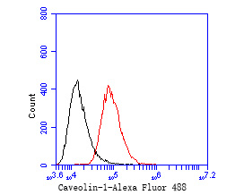 Flow cytometric analysis of Caveolin-1 was done on PANC-1 cells. The cells were fixed, permeabilized and stained with the primary antibody (EM1901-88, 1/50) (red). After incubation of the primary antibody at room temperature for an hour, the cells were stained with a Alexa Fluor 488-conjugated Goat anti-Mouse IgG Secondary antibody at 1/1000 dilution for 30 minutes.Unlabelled sample was used as a control (cells without incubation with primary antibody; black).