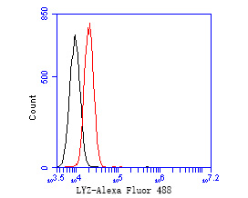Flow cytometric analysis of Lysozyme was done on A549 cells. The cells were fixed, permeabilized and stained with the primary antibody (EM1901-99, 1/50) (red). After incubation of the primary antibody at room temperature for an hour, the cells were stained with a Alexa Fluor 488-conjugated Goat anti-Mouse IgG Secondary antibody at 1/1000 dilution for 30 minutes.Unlabelled sample was used as a control (cells without incubation with primary antibody; black).