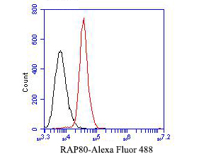 Flow cytometric analysis of RAP80 was done on SiHa cells. The cells were fixed, permeabilized and stained with the primary antibody (EM1902-05, 1/50) (red). After incubation of the primary antibody at room temperature for an hour, the cells were stained with a Alexa Fluor 488-conjugated Goat anti-Mouse IgG Secondary antibody at 1/1000 dilution for 30 minutes.Unlabelled sample was used as a control (cells without incubation with primary antibody; black).