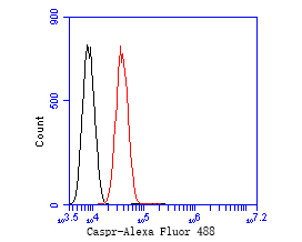 Flow cytometric analysis of Caspr was done on SH-SY5Y cells. The cells were fixed, permeabilized and stained with the primary antibody (EM1902-07, 1/50) (red). After incubation of the primary antibody at room temperature for an hour, the cells were stained with a Alexa Fluor 488-conjugated Goat anti-Mouse IgG Secondary antibody at 1/1000 dilution for 30 minutes.Unlabelled sample was used as a control (cells without incubation with primary antibody; black).