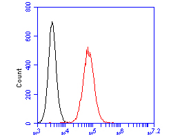 Flow cytometric analysis of CASK was done on SW620 cells. The cells were fixed, permeabilized and stained with the primary antibody (EM1902-09, 1/100) (red). After incubation of the primary antibody at room temperature for an hour, the cells were stained with a Alexa FluorTM488 Goat anti-Mouse  IgG Secondary antibody at 1/500 dilution for 30 minutes.Unlabelled sample was used as a control (cells without incubation with primary antibody; blcak).