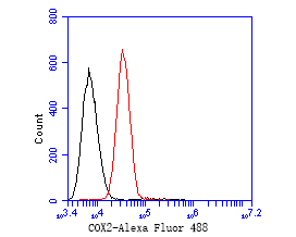 Flow cytometric analysis of COX2 was done on A549 cells. The cells were fixed, permeabilized and stained with the primary antibody (EM1902-11, 1/50) (red). After incubation of the primary antibody at room temperature for an hour, the cells were stained with a Alexa Fluor 488-conjugated Goat anti-Mouse IgG Secondary antibody at 1/1000 dilution for 30 minutes.Unlabelled sample was used as a control (cells without incubation with primary antibody; black).