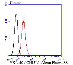Flow cytometric analysis of YKL-40 / CHI3L1 was done on HepG2 cells. The cells were fixed, permeabilized and stained with YKL-40 / CHI3L1 antibody at 1/100 dilution (red) compared with an unlabelled control (cells without incubation with primary antibody; black). After incubation of the primary antibody on room temperature for an hour, the cells was stained with a Alexa Fluor™ 488-conjugated goat anti-mouse IgG Secondary antibody at 1/500 dilution for 30 minutes.