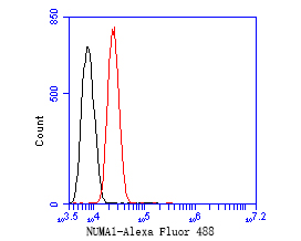 Flow cytometric analysis of NuMA was done on SH-SY5Y cells. The cells were fixed, permeabilized and stained with the primary antibody (EM1902-16, 1/50) (red). After incubation of the primary antibody at room temperature for an hour, the cells were stained with a Alexa Fluor 488-conjugated Goat anti-Mouse IgG Secondary antibody at 1/1000 dilution for 30 minutes.Unlabelled sample was used as a control (cells without incubation with primary antibody; black).