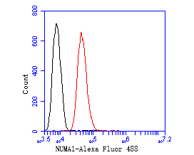Flow cytometric analysis of NuMA was done on SH-SY5Y cells. The cells were fixed, permeabilized and stained with the primary antibody (EM1902-17, 1/50) (red). After incubation of the primary antibody at room temperature for an hour, the cells were stained with a Alexa Fluor 488-conjugated Goat anti-Mouse IgG Secondary antibody at 1/1000 dilution for 30 minutes.Unlabelled sample was used as a control (cells without incubation with primary antibody; black).