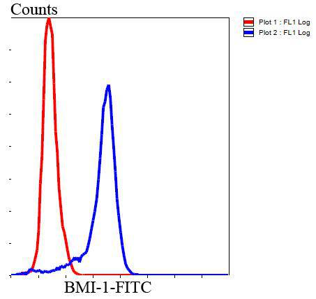 Flow cytometric analysis of Hela cells with BMI1 antibody at 1/100 dilution (blue) compared with an unlabelled control (cells without incubation with primary antibody; red). Goat anti mouse IgG (FITC) was used as the secondary antibody.