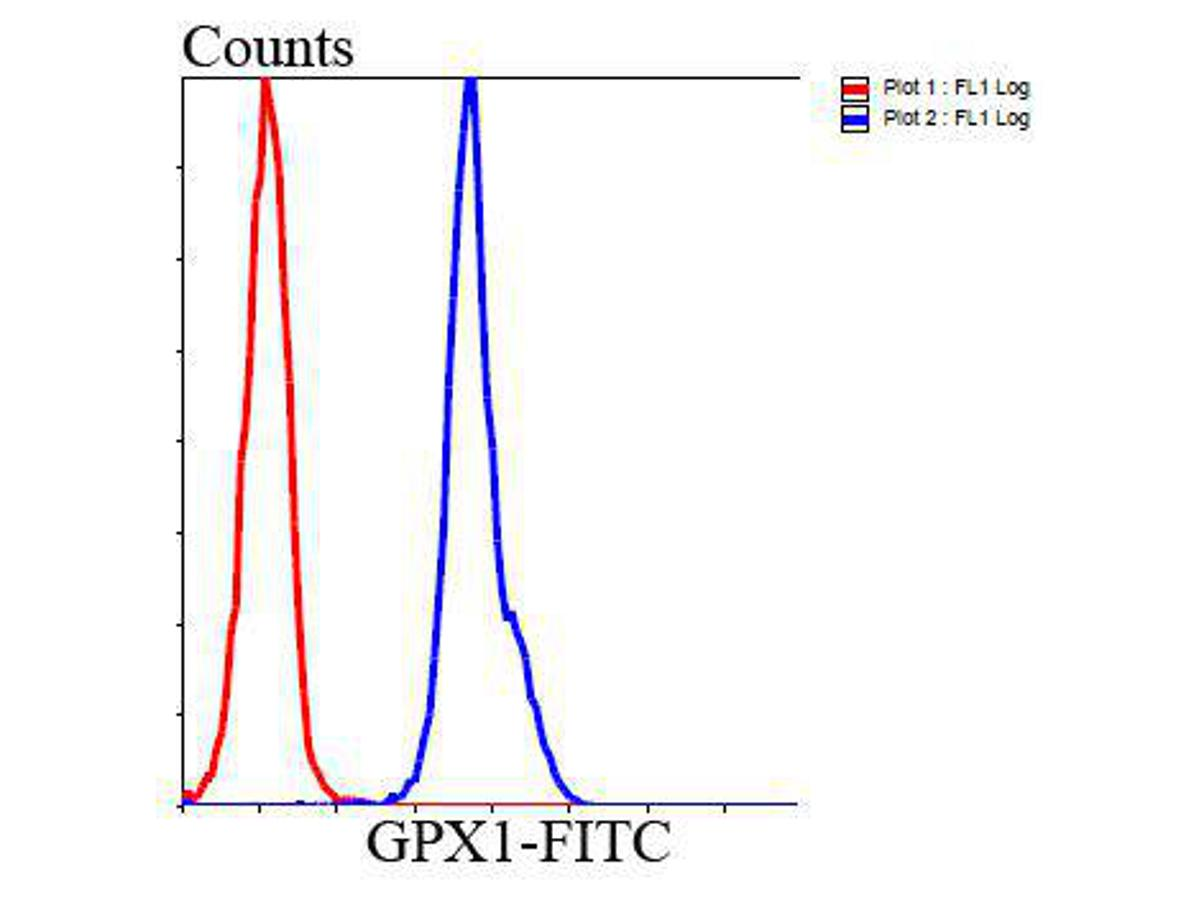 Flow cytometric analysis of HepG2 cells with GPX1 antibody at 1/100 dilution (blue) compared with an unlabelled control (cells without incubation with primary antibody; red). Goat anti mouse IgG (FITC) was used as the secondary antibody.