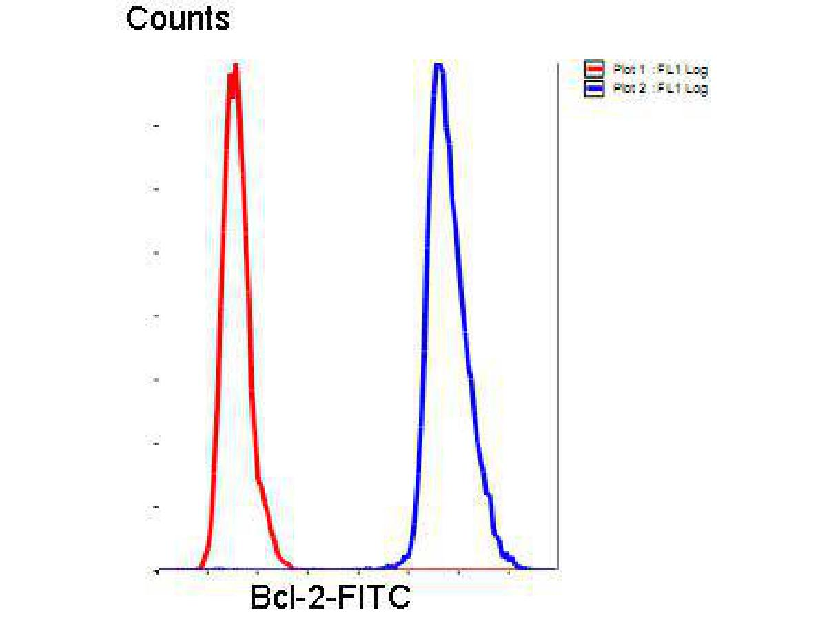 Flow cytometric analysis of Hela cells with Bcl-2 antibody at 1/50 dilution (blue) compared with an unlabelled control (cells without incubation with primary antibody; red). Goat anti rabbit IgG (FITC) was used as the secondary antibody.