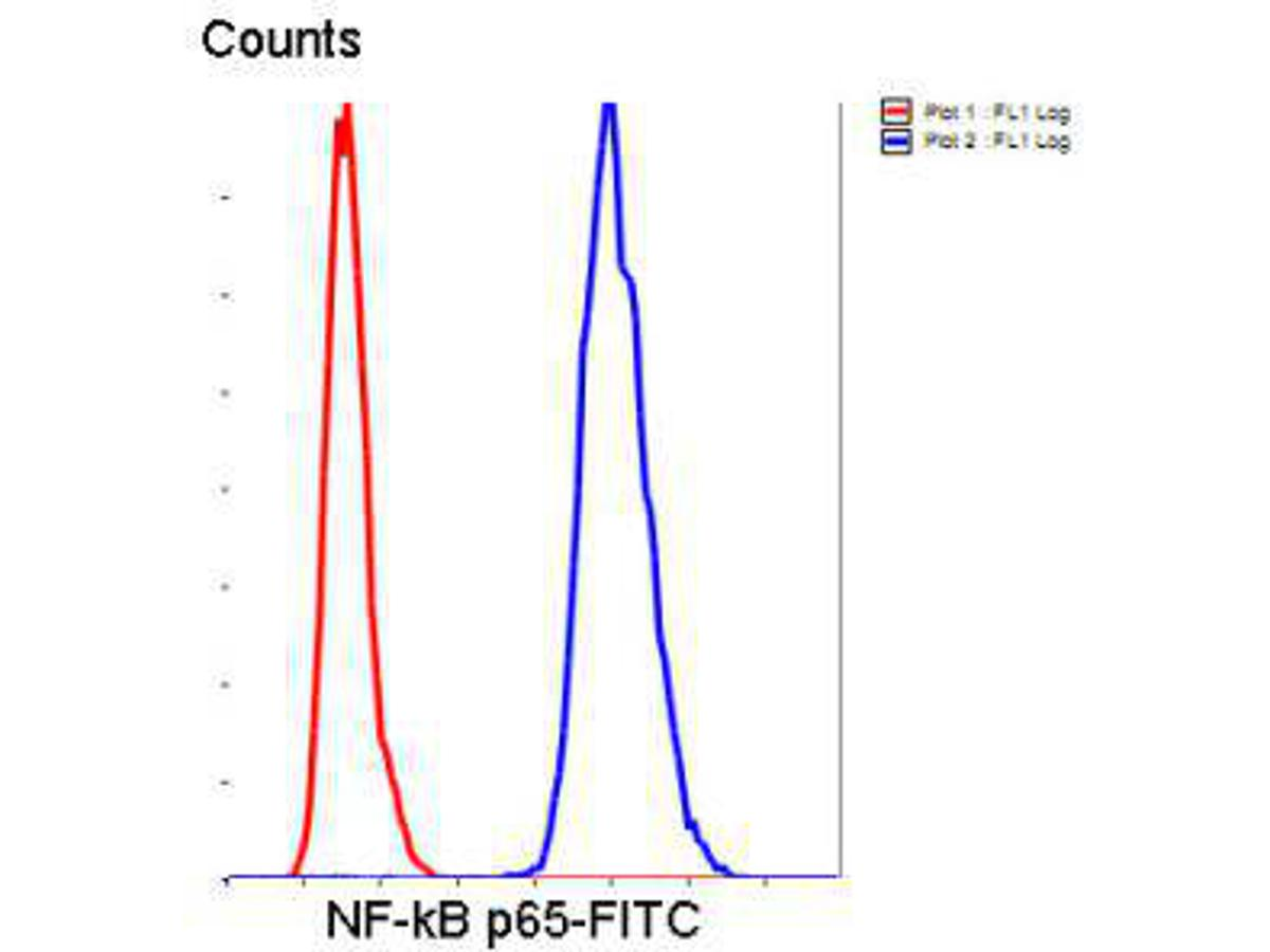 Flow cytometric analysis of Hela cells with NF-κB p65 antibody at 1/50 dilution (blue) compared with an unlabelled control (cells without incubation with primary antibody; red). Goat anti rabbit IgG (FITC) was used as the secondary antibody.