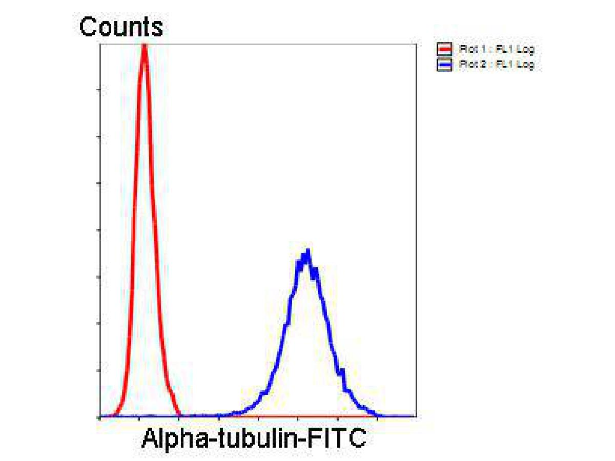 Flow cytometric analysis of Hela cells with Alpha-tubulin antibody at 1/100 dilution (blue) compared with an unlabelled control (cells without incubation with primary antibody; red). Goat anti rabbit IgG (FITC) was used as the secondary antibody.
