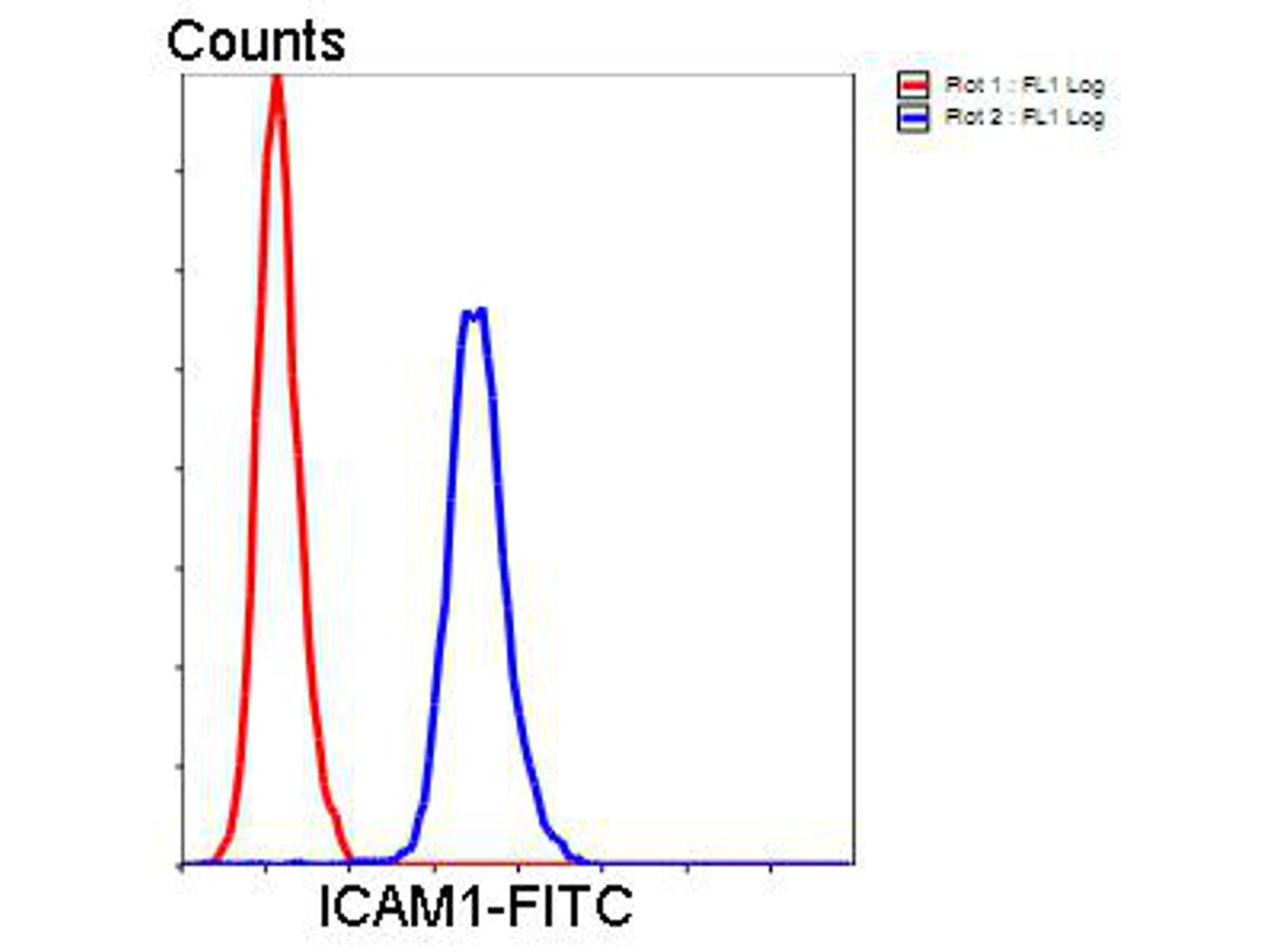 Flow cytometric analysis of Hela cells with ICAM1 antibody at 1/100 dilution (blue) compared with an unlabelled control (cells without incubation with primary antibody; red). Goat anti rabbit IgG (FITC) was used as the secondary antibody.