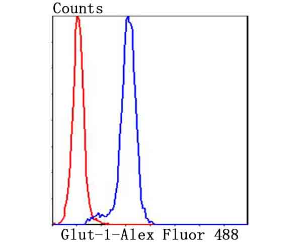 Flow cytometric analysis of Hela cells with Glut1 antibody at 1/100 dilution (blue) compared with an unlabelled control (cells without incubation with primary antibody; red). Alexa Fluor 488-conjugated goat anti-rabbit IgG was used as the secondary antibody.