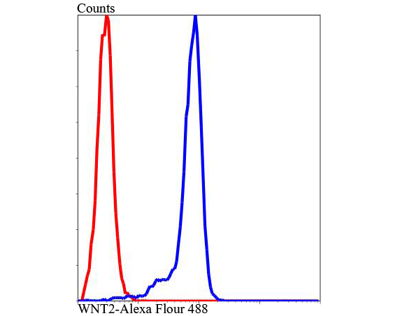Flow cytometric analysis of Jurkat cells with WNT2 antibody at 1/100 dilution (blue) compared with an unlabelled control (cells without incubation with primary antibody; red). Alexa Fluor 488-conjugated Goat anti rabbit IgG was used as the secondary antibody.