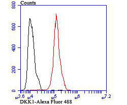 Flow cytometric analysis of Hela cells with DKK1 antibody at 1/100 dilution (red) compared with an unlabelled control (cells without incubation with primary antibody; black). Alexa Fluor 488-conjugated goat anti rabbit IgG was used as the secondary antibody.