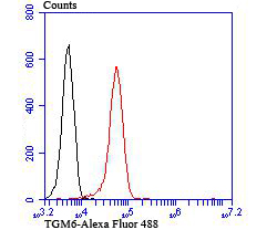 Flow cytometric analysis of 293T cells with TGM6 antibody at 1/100 dilution (red) compared with an unlabelled control (cells without incubation with primary antibody; black). Alexa Fluor 488-conjugated Goat anti rabbit IgG was used as the secondary antibody.