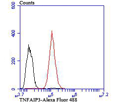 Flow cytometric analysis of HepG2 cells with TNFAIP3 antibody at 1/100 dilution (red) compared with an unlabelled control (cells without incubation with primary antibody; black). Goat anti rabbit IgG (FITC) was used as the secondary antibody.