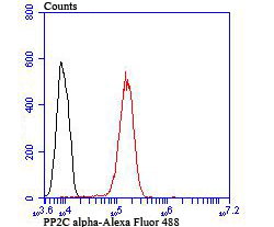 Flow cytometric analysis of A431 cells with PP2C alpha antibody at 1/100 dilution (red) compared with an unlabelled control (cells without incubation with primary antibody; black). Alexa Fluor 488-conjugated goat anti rabbit IgG was used as the secondary antibody.