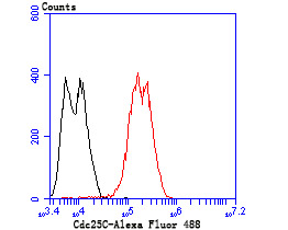 Flow cytometric analysis of LOVO cells with Cdc25C antibody at 1/100 dilution (red) compared with an unlabelled control (cells without incubation with primary antibody; black). Alexa Fluor 488-conjugated goat anti rabbit IgG was used as the secondary antibody.
