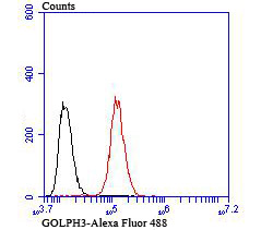 Flow cytometric analysis of Hela cells with GOLPH3 antibody at 1/100 dilution (green) compared with an unlabelled control (cells without incubation with primary antibody; red).
