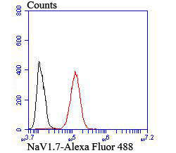 Flow cytometric analysis of SH-SY5Y cells with NaV1.7 antibody at 1/100 dilution (red) compared with an unlabelled control (cells without incubation with primary antibody; black).