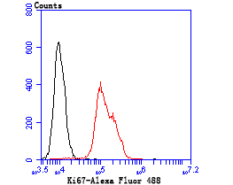 Flow cytometric analysis of Hela cells with Ki67 antibody at 1/100 dilution (green) compared with an unlabelled control (cells without incubation with primary antibody; red). Alexa Fluor 488-conjugated goat anti-rabbit IgG was used as the secondary antibody.