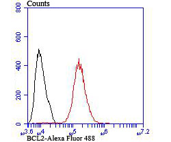 Flow cytometric analysis of MCF-7 cells with BCL2 antibody at 1/100 dilution (red) compared with an unlabelled control (cells without incubation with primary antibody; black). Alexa Fluor 488-conjugated goat anti rabbit IgG was used as the secondary antibody.