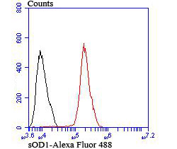 Flow cytometric analysis of MCF-7 cells with SOD1 antibody at 1/100 dilution (red) compared with an unlabelled control (cells without incubation with primary antibody; black). Alexa Fluor 488-conjugated goat anti rabbit IgG was used as the secondary antibody.