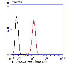 Flow cytometric analysis of Jurkat cells with GRP78 antibody at 1/100 dilution (red) compared with an unlabelled control (cells without incubation with primary antibody; black). Alexa Fluor 488-conjugated Goat anti rabbit IgG was used as the secondary antibody.