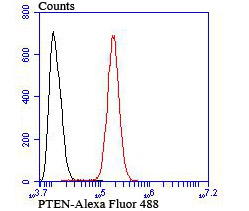 Flow cytometric analysis of SH-SY5Y cells with PTEN antibody at 1/100 dilution (red) compared with an unlabelled control (cells without incubation with primary antibody; black).