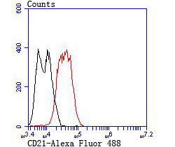 Flow cytometric analysis of LOVO cells with CD21 antibody at 1/100 dilution (red) compared with an unlabelled control (cells without incubation with primary antibody; black). Alexa Fluor 488-conjugated goat anti-rabbit IgG was used as the secondary antibody.