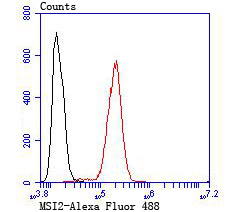 Flow cytometric analysis of SH-SY5Y cells with MSI2 antibody at 1/100 dilution (red) compared with an unlabelled control (cells without incubation with primary antibody; black). Alexa Fluor 488-conjugated goat anti rabbit IgG was used as the secondary antibody.