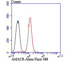 Flow cytometric analysis of PC-3M cells with AMACR antibody at 1/100 dilution (red) compared with an unlabelled control (cells without incubation with primary antibody; black). Alexa Fluor 488-conjugated goat anti rabbit IgG was used as the secondary antibody.