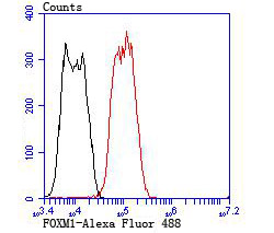 Flow cytometric analysis of LOVO cells with FOXM1 antibody at 1/100 dilution (red) compared with an unlabelled control (cells without incubation with primary antibody; black). Alexa Fluor 488-conjugated goat anti rabbit IgG was used as the secondary antibody.