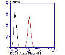Flow cytometric analysis of 293T cells with DLL4 antibody at 1/100 dilution (red) compared with an unlabelled control (cells without incubation with primary antibody; black). Alexa Fluor 488-conjugated goat anti-rabbit IgG was used as the secondary antibody.