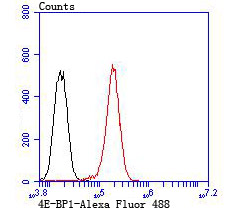 Flow cytometric analysis of PC-3M cells with 4E-BP1 antibody at 1/100 dilution (red) compared with an unlabelled control (cells without incubation with primary antibody; black). Alexa Fluor 488-conjugated goat anti rabbit IgG was used as the secondary antibody.