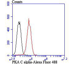 Flow cytometric analysis of PC-3M cells with PKA C-alpha antibody at 1/100 dilution (red) compared with an unlabelled control (cells without incubation with primary antibody; black).