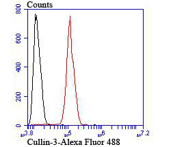 Flow cytometric analysis of SH-SY5Y cells with Cullin 3 antibody at 1/100 dilution (red) compared with an unlabelled control (cells without incubation with primary antibody; black). Alexa Fluor 488-conjugated goat anti-rabbit IgG was used as the secondary antibody.