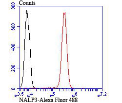 Flow cytometric analysis of Jurkat cells with NLRP3 antibody at 1/100 dilution (red) compared with an unlabelled control (cells without incubation with primary antibody; black). Alexa Fluor 488-conjugated goat anti-rabbit IgG was used as the secondary antibody.